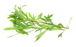 Fresh tarragon herb Royalty Free Stock Images
