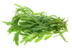 Fresh tarragon herb Royalty Free Stock Photography