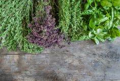 Fresh tarragon, oregano, basil, thyme on a wooden table backgrou Stock Photos