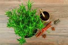 Fresh Tarragon Spice Isolated on Wood Stock Photography