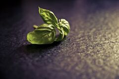 fresh tasty basil Royalty Free Stock Photography