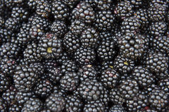 Fresh and tasty blackberries Royalty Free Stock Photography