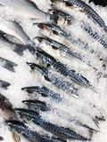 Fresh tasty fish on ice at market. View stock photography