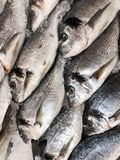 Fresh tasty fish on ice at market. View royalty free stock image