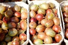 Fresh tasty gooseberries macro closeup on market outdoor Royalty Free Stock Photography