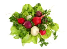Fresh Tasty Greens And Radish Royalty Free Stock Images