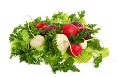 Fresh tasty greens and radish. Fresh tasty greens and color radish isolated on white background Royalty Free Stock Photos