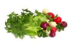 Fresh tasty greens and  radish. Fresh tasty greens and color radish isolated on white background Royalty Free Stock Photography