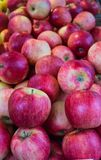 Fresh, tasty, juicy, red apples in a box in the market. royalty free stock image