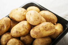 Fresh tasty new potatoes. Selective focus Stock Images