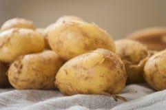Fresh tasty new potatoes. Selective focus Royalty Free Stock Image