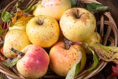 Fresh and tasty organic apples in a basket stock images