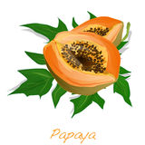 Fresh and tasty papaya Stock Photo