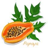 Fresh and tasty papaya Royalty Free Stock Images