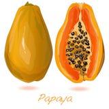 Fresh and tasty papaya Stock Photos