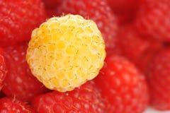 Fresh and tasty raspberry. Close up Stock Image