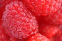 Fresh and tasty raspberry. Close up Stock Photos