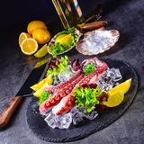 Raw octopus on the ice. A fresh and tasty raw octopus on the ice Stock Images