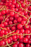 Fresh tasty red currant berries macro closeup on market outdoor Stock Images