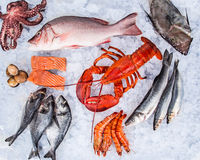 Fresh tasty seafood served on old wooden table. Royalty Free Stock Photos