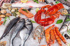 Fresh tasty seafood served on old wooden table. Stock Images