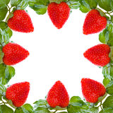 Fresh and tasty strawberries Royalty Free Stock Image