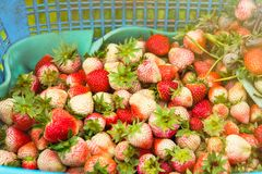 Fresh and tasty strawberries background, close up.Thailand. Fresh and tasty strawberries background, close up.Thailand Stock Photos