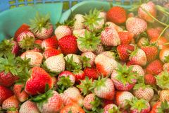 Fresh and tasty strawberries background, close up.Thailand. Fresh and tasty strawberries background, close up.Thailand Royalty Free Stock Image