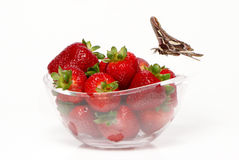 Fresh and tasty strawberries and butterfly Royalty Free Stock Photo