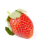 Fresh tasty strawberries on a white Royalty Free Stock Photos