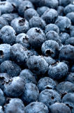 Fresh tasty sweet blue berries Royalty Free Stock Photography