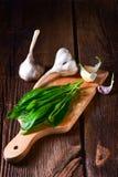 Fresh and tasty wild garlic Stock Photography
