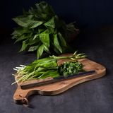 Fresh and tasty wild garlic Royalty Free Stock Photo