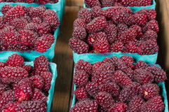 Fresh Tayberries in boxes at market Stock Image