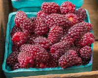 Fresh Tayberries in boxes at market Stock Photo