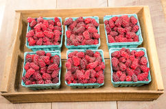 Fresh Tayberries on display at the market Stock Images