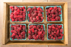 Fresh Tayberries on display at the market Stock Photography
