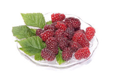 Fresh tayberries on a glass plate Royalty Free Stock Photo
