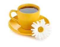 Fresh tea camomile flowers Stock Images