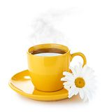 Fresh tea camomile flowers Royalty Free Stock Images