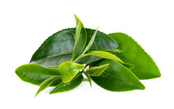 Fresh Tea leaf isolated on the white background.  Royalty Free Stock Photography