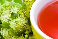 Fresh Tea of lime blossom - Tilia platyphyllos Stock Photos