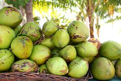 Fresh tender coconuts mound Caribbean Mexico. Fresh tender coconuts green mound Caribbean Mexico tropical beverage Royalty Free Stock Photos