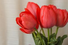 Fresh tender pink tulips in a vase with violet paper and ribbon bow on the background of linen fabric, copy space stock images