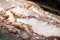 Fresh tentacles in ice Royalty Free Stock Photo