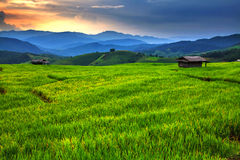Fresh terrace rice field with mountain range Stock Photography