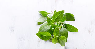 Fresh Thai Basil on a Wooden Background Stock Image