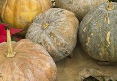 Fresh Thai pumpkins Royalty Free Stock Photography