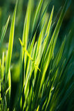 Fresh thick grass Stock Photo