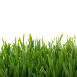 Fresh thick grass closeup Royalty Free Stock Photography